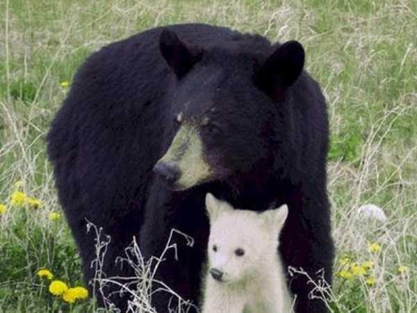 albino-animals (50)