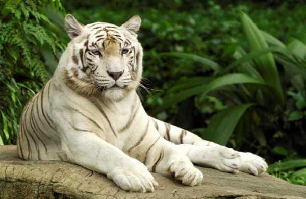 albino-animals (53)