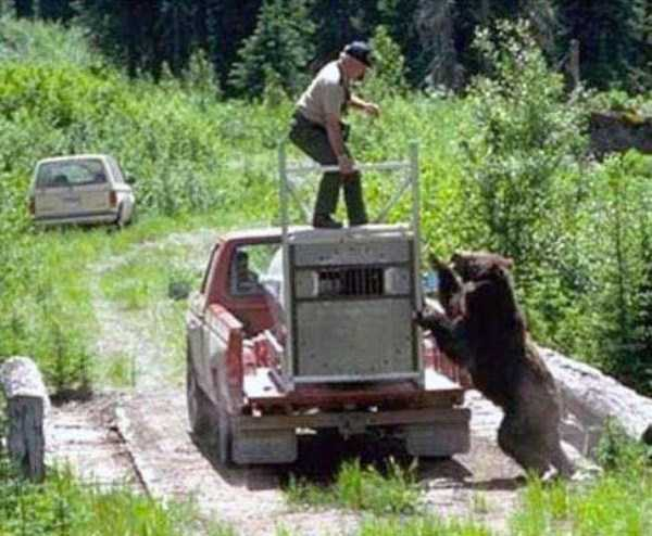 grizzly-attack (4)