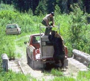 Forest Ranger Attacked by Grizzly Bear (9 photos) 5