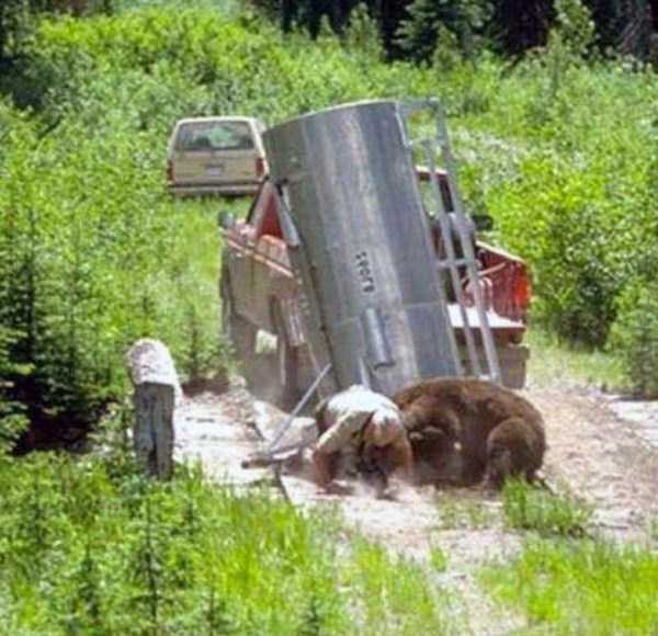 Forest Ranger Attacked By Grizzly Bear  9 Photos