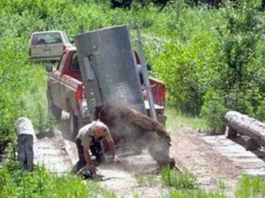 Forest Ranger Attacked by Grizzly Bear (9 photos) 8