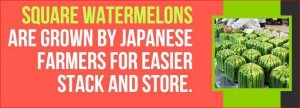 20 Surprising Facts About Japan (20 photos) 14