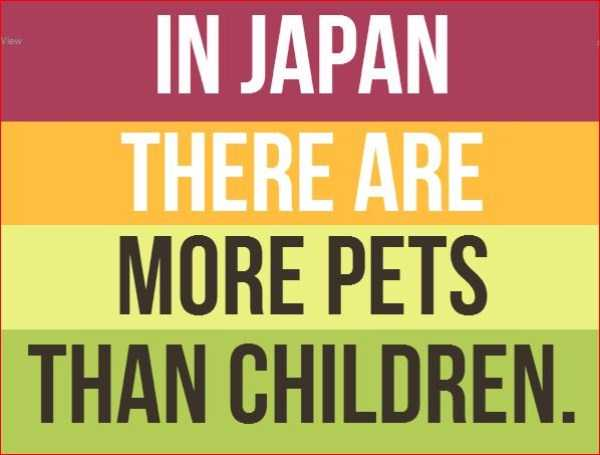 20 Surprising Facts About Japan (20 photos) 20