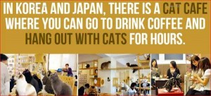 20 Surprising Facts About Japan (20 photos) 9