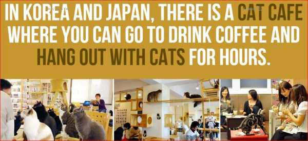 japan-facts (9)