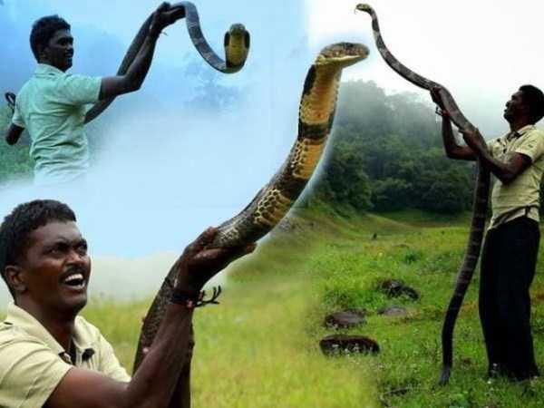Vava-Suresh-snake-expert (14)