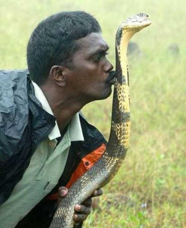 Vava-Suresh-snake-expert (15)