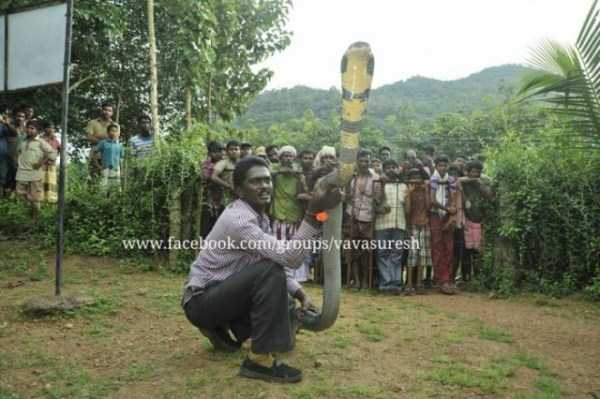 Vava-Suresh-snake-expert (17)