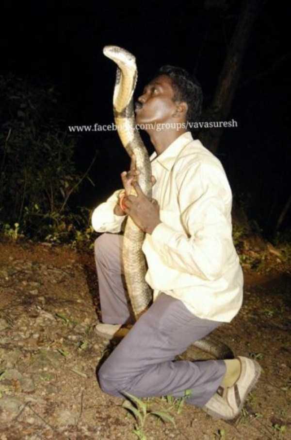 Vava-Suresh-snake-expert (18)