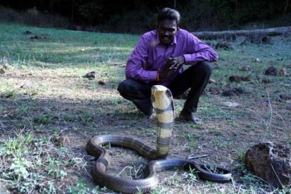 Vava-Suresh-snake-expert (2)