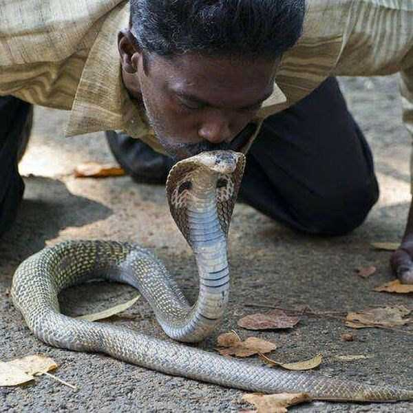 Vava-Suresh-snake-expert (20)