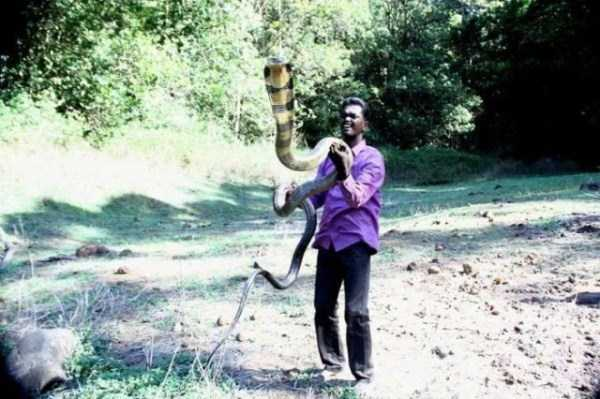 Vava-Suresh-snake-expert (21)