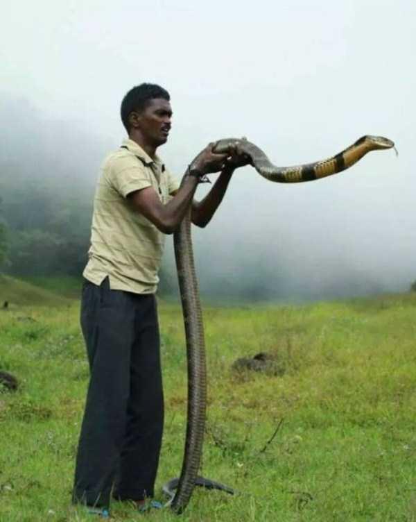Vava-Suresh-snake-expert (22)