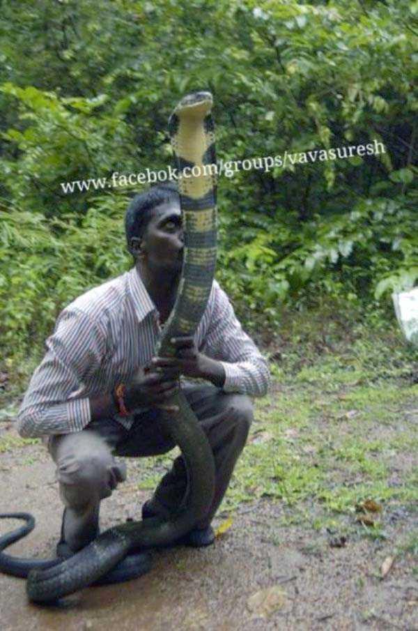 Vava-Suresh-snake-expert (24)