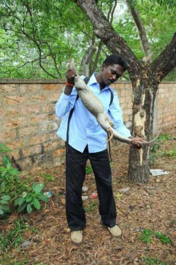 Vava-Suresh-snake-expert (25)