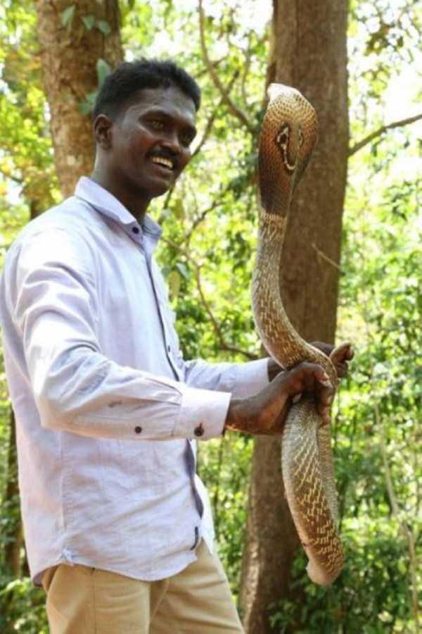 Vava-Suresh-snake-expert (3)