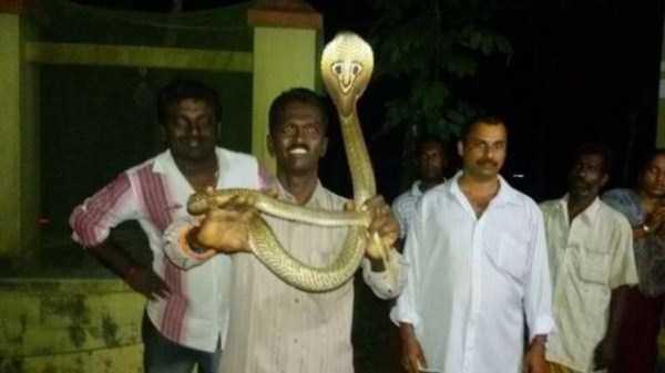 Vava-Suresh-snake-expert (4)
