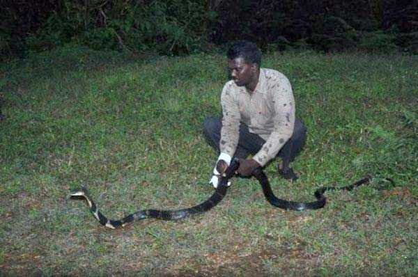 Insanely Brave Snake Expert From India (25 photos) 5