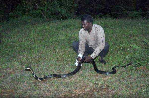 Vava-Suresh-snake-expert (5)