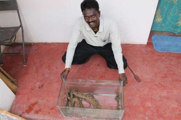 Vava-Suresh-snake-expert (7)
