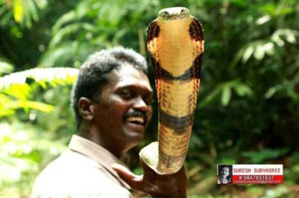 Vava-Suresh-snake-expert (8)