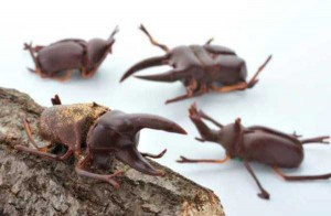 Seriously Strange Things Made of Chocolate (28 photos) 26