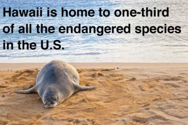 hawaii-facts (19)