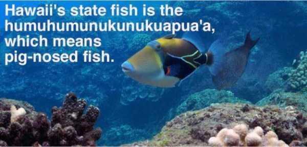 hawaii-facts (8)