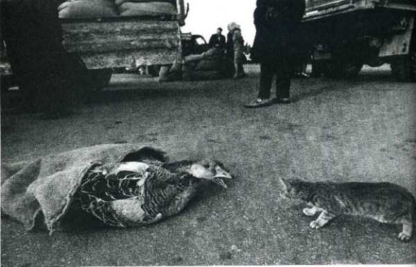 historical-photos-from-russia (98)