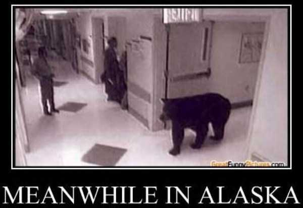 meanwhile-in-alaska (12)