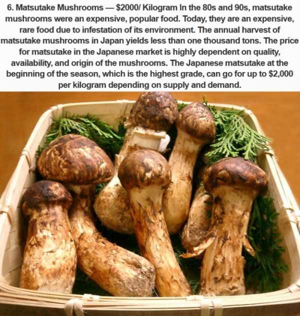 most-expensive-fodd-in-japan (5)