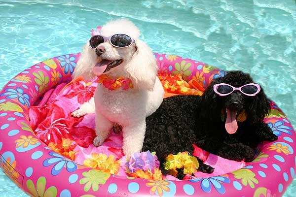 summer-dogs (13)