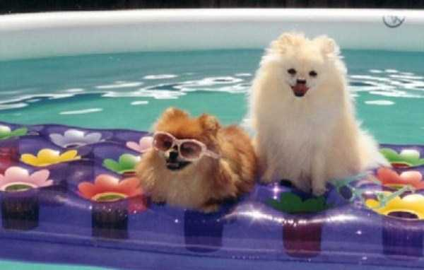 summer-dogs (3)