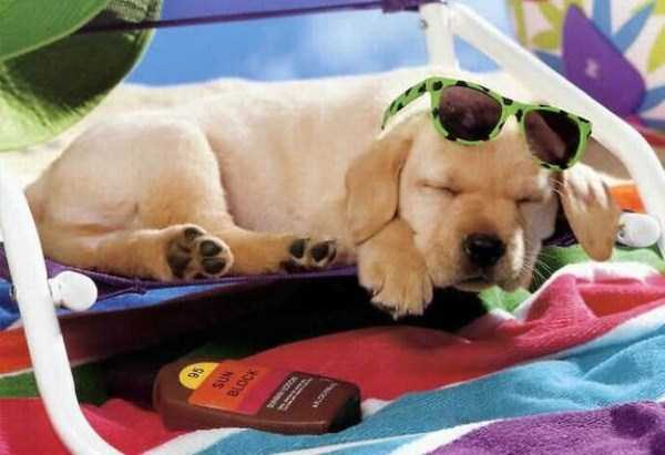 summer-dogs (4)