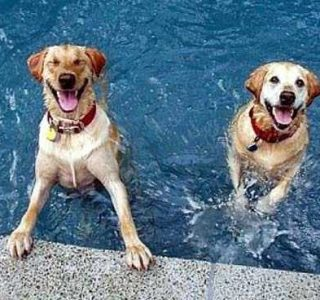 Dogs That Are Definitely Ready For Summer (40 photos)
