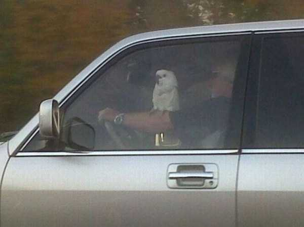 the-strangest-things-you-will-see-on-the-road-28