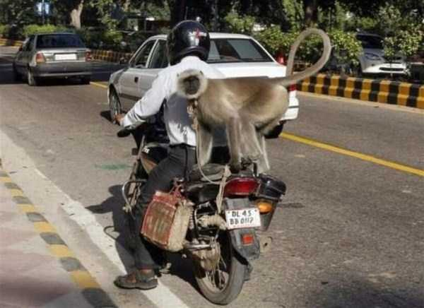 the-strangest-things-you-will-see-on-the-road-31