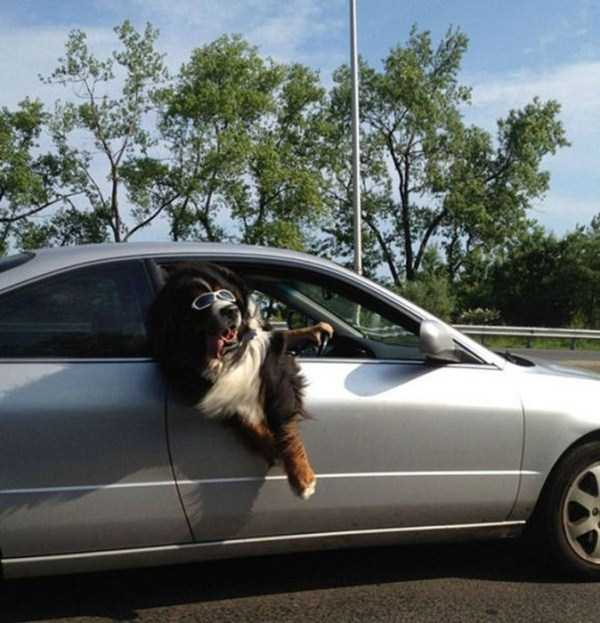 the-strangest-things-you-will-see-on-the-road-5