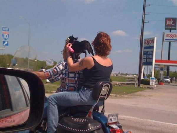 the-strangest-things-you-will-see-on-the-road-60