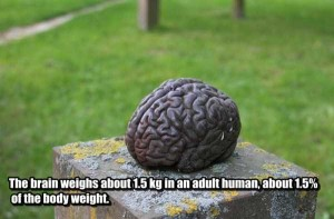 25 Things You Probably Didn't Know About The Human Brain (25 photos) 11
