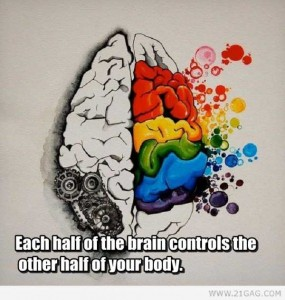 25 Things You Probably Didn't Know About The Human Brain (25 photos) 12