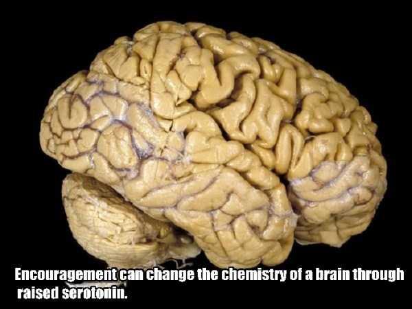 human-brain19