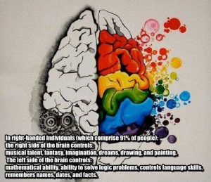 25 Things You Probably Didn't Know About The Human Brain (25 photos) 2