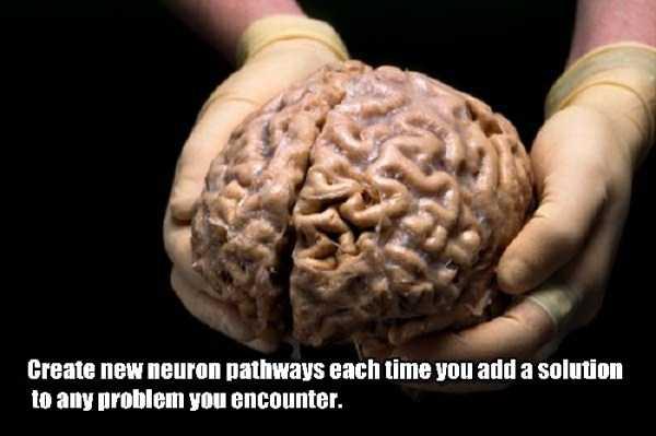 human-brain20