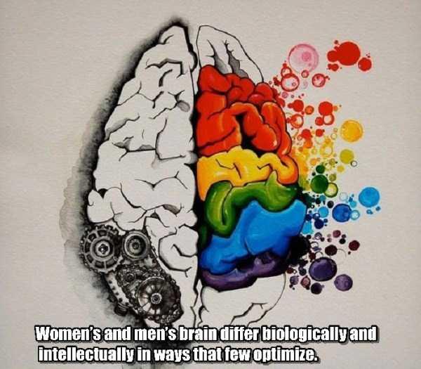 human-brain25