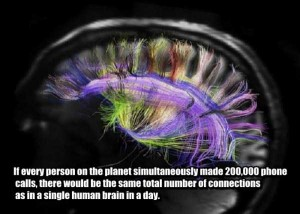 25 Things You Probably Didn't Know About The Human Brain (25 photos) 3