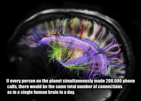 human-brain3
