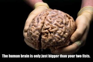 25 Things You Probably Didn't Know About The Human Brain (25 photos) 5