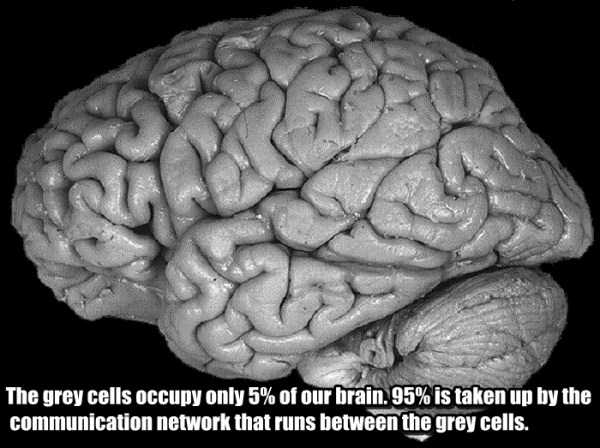human-brain6
